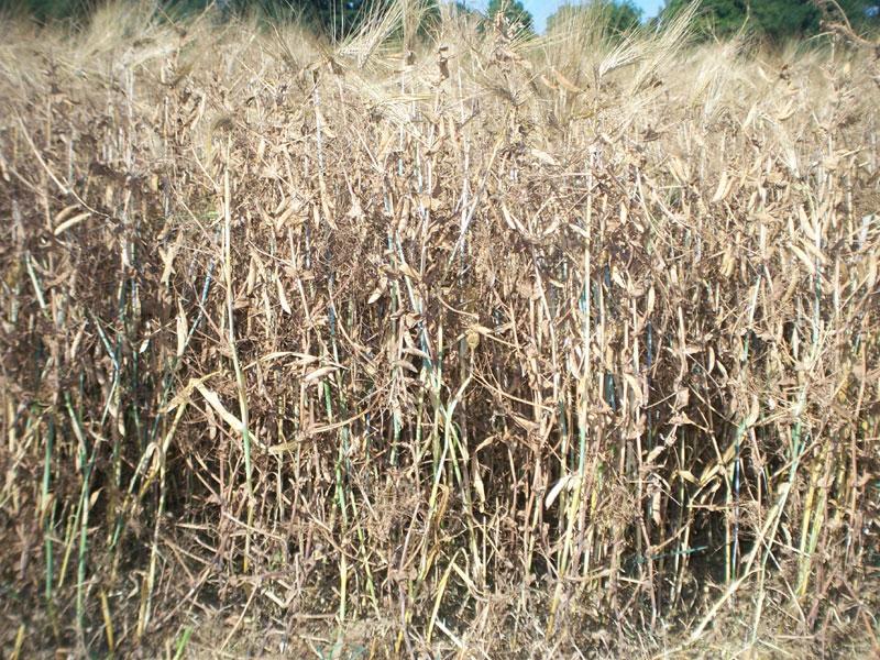 Mesures pr ventives for Couverture plante hiver